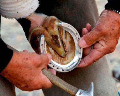 Хромота лошади. Лечение копыт