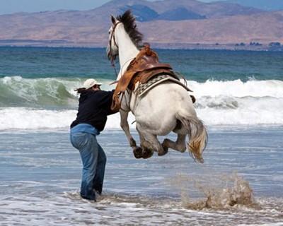 Лошадь и волны