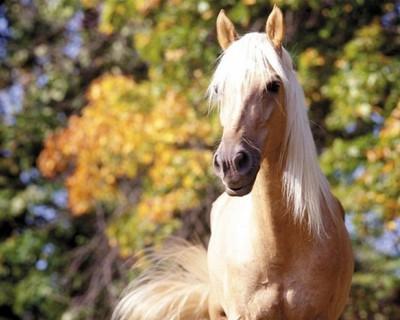 Стоит ли заводить лошадь и сколько это стоит