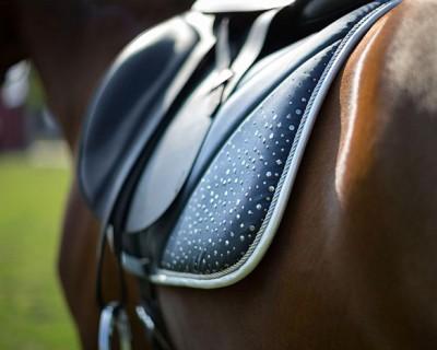 Как правильно выбрать вальтрап для своей лошади?
