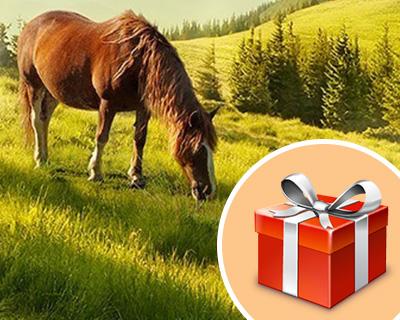 Мы проводим акцию в мае - вручаем подарки в конном магазине igogo.club!
