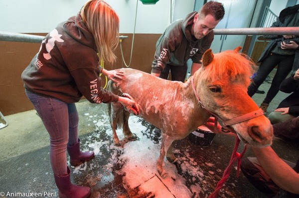 Мытье пони