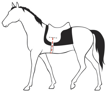 Таблица размеров подпруг для лошади
