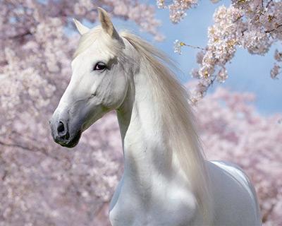 Режим работы конного магазина на майских праздниках 2017
