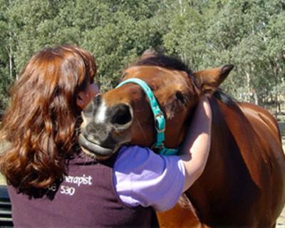 Уход за шерстью лошади