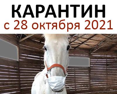 Режим работы конного магазина igogo.club в нерабочие дни с 28 марта по 31 мая