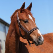 Недоуздок Horse One Halter с флисовой подложкой
