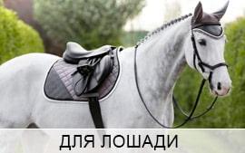 Категория товаров для лошади