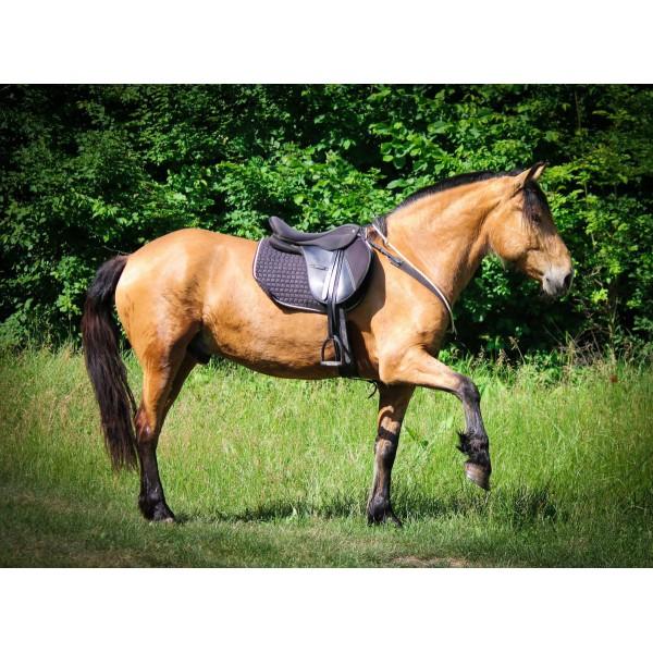 Седло синтетическое универсальное Horze Euro-Rider