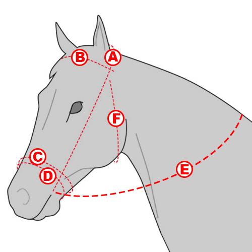 Размер уздечки для лошади